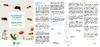 LEAFLET_Abeilles-Bijen_NL - application/pdf
