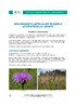 IF_biodiversite_Centauree_jacee_DEF_NL.pdf - application/pdf
