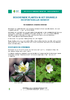 IF_biodiversite_Anemone_sylvie_DEF_NL.pdf - application/pdf